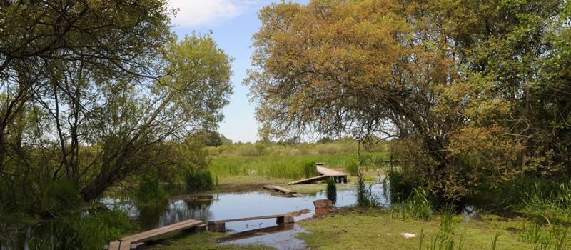 Graine de viking | Marais du Grand Hazé